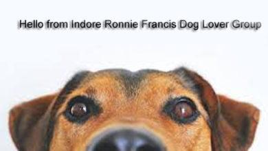 Photo of कोरोना फैलाने में कुत्तों की भी हो सकती है भूमिका, अध्ययन में हुआ खुलासा