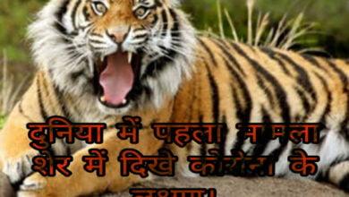 Photo of दुनिया में पहला मामला, शेर में दिखे कोरोना के लक्षण