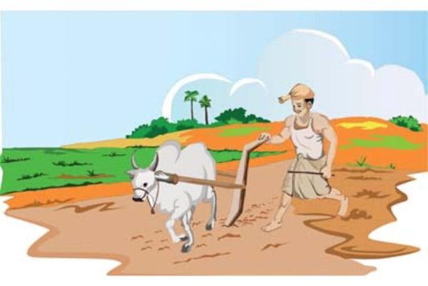 उज्जैन | कोरोना वायरस संक्रमण अवधि में मध्यप्रदेश शासन द्वारा कृषकों के हित में प्रदेश की कृषि उपज मंडी समितियों में कृषि उपजों का क्रय विक्रय सौदा पत्रक के